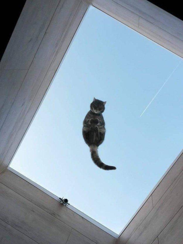 """15. """"Как это я попал на крышу?.."""" животные, коты, милота"""