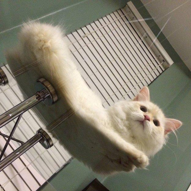 18. С этого момента - только стекло! животные, коты, милота
