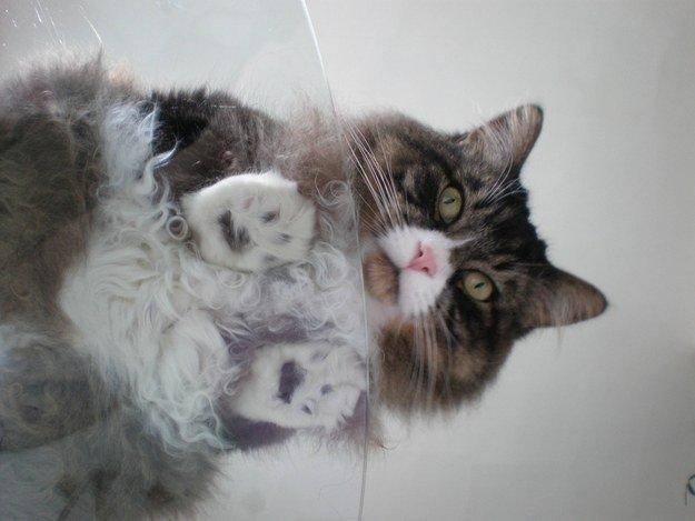 3. Некоторые из них немного смущены тем, что происходит. животные, коты, милота