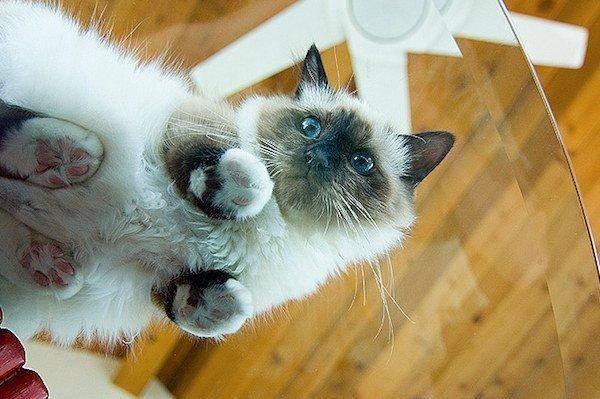 8. Мы не знаем лучшего способа смотреть на кота. животные, коты, милота
