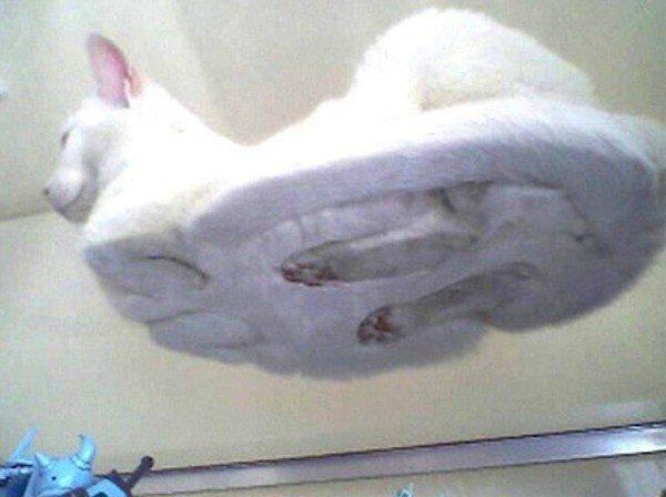 1. Научно доказано*, что кошки - самые милые животные на планете. животные, коты, милота