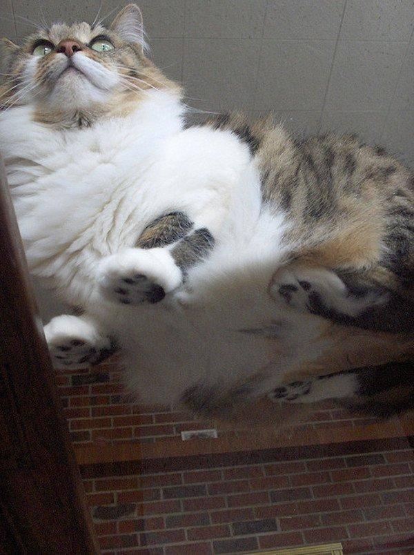 21. Потому что фото кота на стекле будут единственными кошачьими фото, которые вам нужны. животные, коты, милота