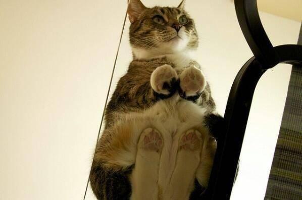 6. Посмотрите на эти миленькие маленькие лапки! животные, коты, милота