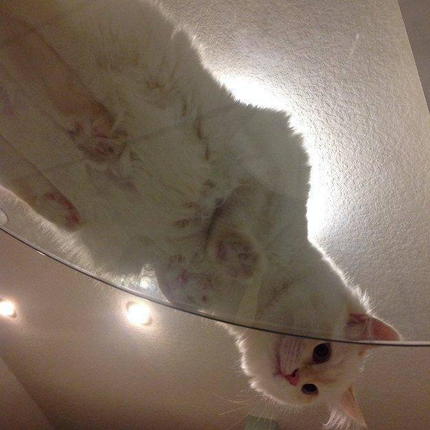 17. Итак, кошатники, пора избавляться от непрозрачных столов. животные, коты, милота