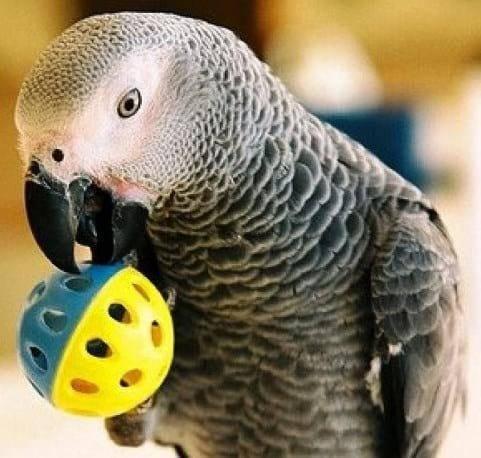 Как смышленый попугай чуть таможенника до истерики не довел!